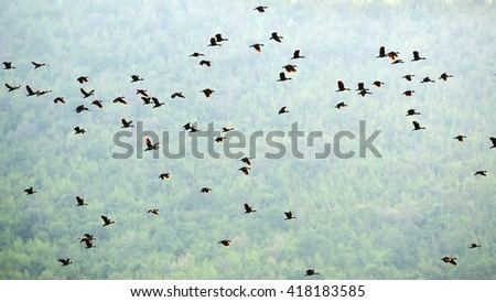 wild ducks flying landscape, at sunset in mountains - stock photo