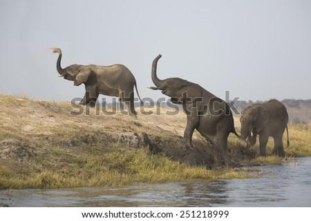 Wild elephant bulls enjoying sand bath   - stock photo