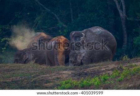 Wild elephants (Elephas maximus) eating salt lickin real nature in the evening at Khaoyai national park, Thailand - stock photo