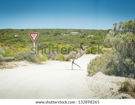 Wild emu crosses the road in front of a give way sign in rural Australia - stock photo