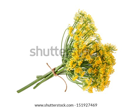 Wild fennel flowers isolated on white - stock photo