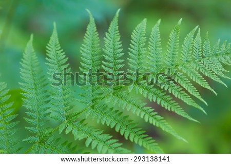 Wild fern growing in forest leaves photographed in european forest in summer. - stock photo