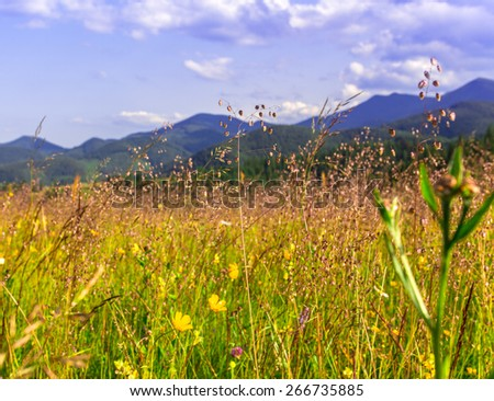 Wild field in Carpathians, summer background. - stock photo