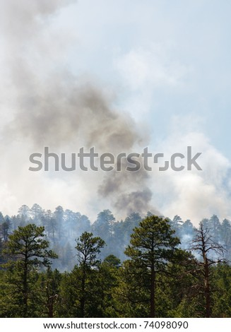 wild fire in the Coconino National Forest - stock photo