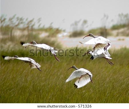 Wild Flight - stock photo