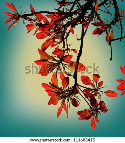 wild flower - stock photo