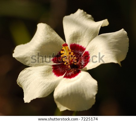 Wild flower - stock photo