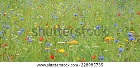 wild flower meadow - stock photo