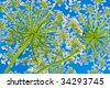 wild flower of queens lace and blue sky - stock photo