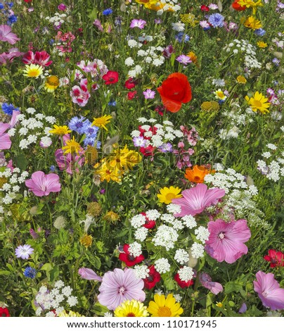 wild flower on a summer meadow - stock photo