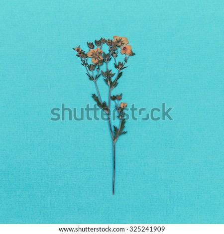 Wild flower on blue background. minimal style - stock photo