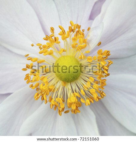 wild flower stamens covered with pollen - stock photo