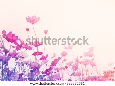 Wild flower with vintage filter unfocused - stock photo
