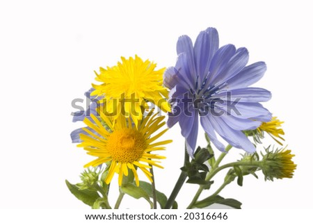 wild flowers - stock photo