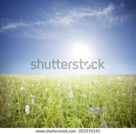 Wild flowers. - stock photo