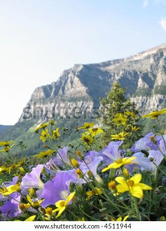 wild flowers - stock photo