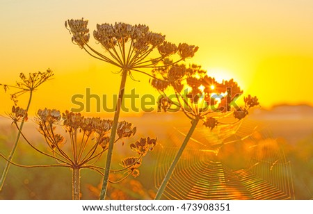 Wild flowers along a canal at sunrise