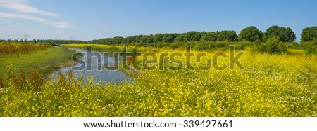 Wild flowers along the shore of a lake in summer