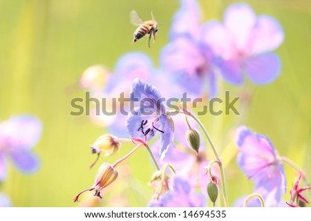 Wild flowers and bee.