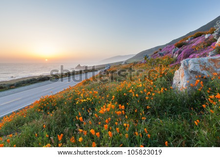 wild flowers and California coast in Big Sur - stock photo
