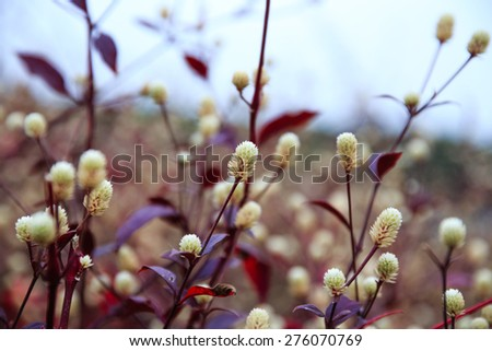 wild flowers and green grass by the lake - stock photo