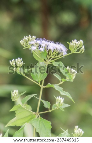 Wild flowers are flowers that occur in a manner that was not intended planting. Found in natural forests There are flowers that bloom in the winter season flowers and floral drought. - stock photo