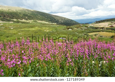 Wild flowers bloom in a Colorado summer landscape - stock photo