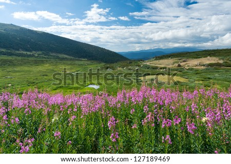 Wild flowers bloom in the warm summer landscape of the Colorado Rocky Mountains - stock photo
