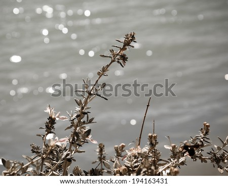 Wild flowers blooming on the lake side. Sunlight. Bokeh and hotspots. Toned photo. - stock photo