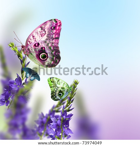 wild flowers blue blooming with butterfly - stock photo