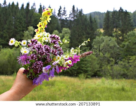 Wild flowers bouquet collected from Apuseni - Carpathian Mountains - stock photo