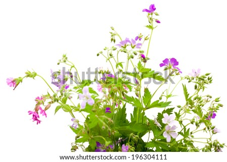wild flowers bunch isolated on white - stock photo
