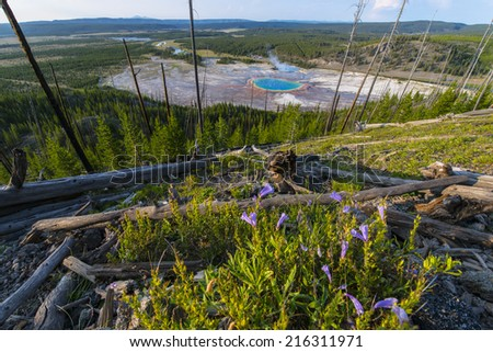 Wild Flowers Grand Prismatic as seen from above. Yellowstone National Park  - stock photo