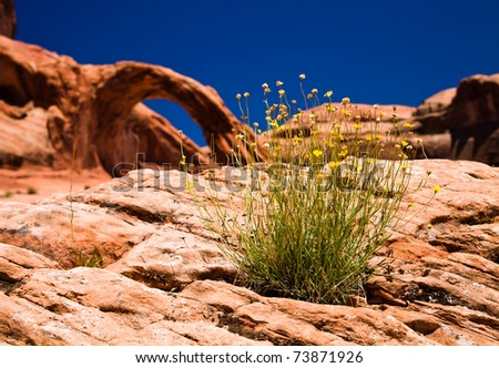 Wild Flowers growing out of a rock with arch in the background - stock photo