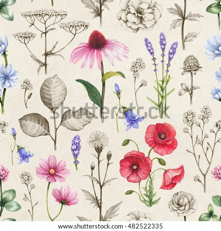 Wild flowers illustrations. Seamless pattern