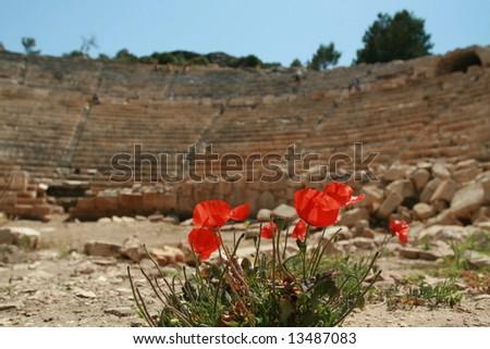 wild flowers in an old roman amphitheater - stock photo