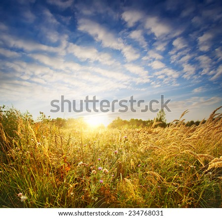 Wild flowers in bright sunlight under a cloudy sky - stock photo