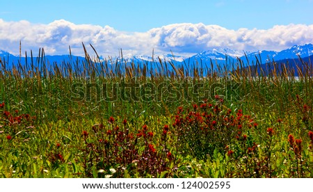 Wild flowers in Glacier Bay National Park, Alaska / color balance is correct, it is natural color of glacier water - stock photo