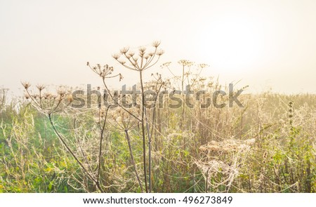 Wild flowers in the light of sunrise in autumn