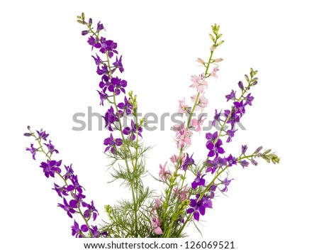 Wild flowers isolated on white background - stock photo