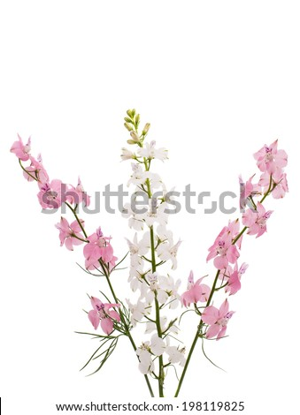 Wild flowers isolated on white background