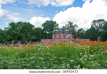 Wild flowers meadow in Stockholm?s botanical garden.