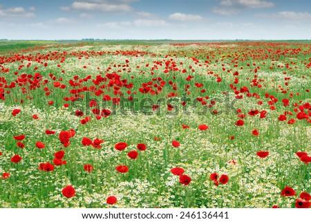 wild flowers meadow landscape spring season - stock photo