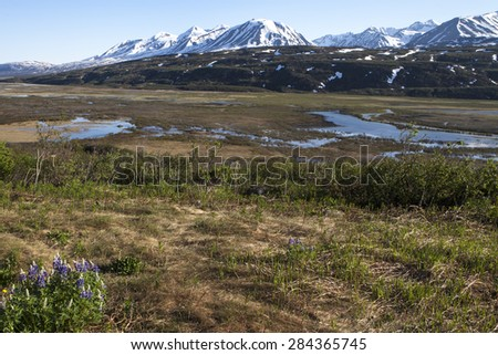 Wild flowers melting snow in the Canadian Yukon in spring with mountains in the background. - stock photo
