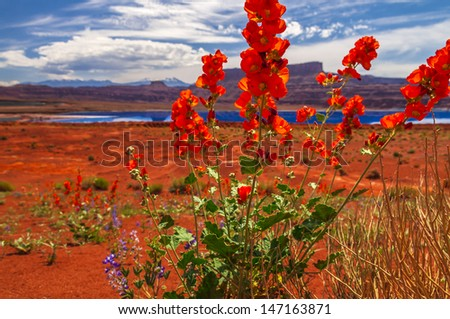 Wild Flowers near Evaporation Pools with La Sale Mountains in the Back against beautiful blue sky - stock photo