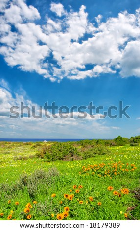 Wild flowers next to sea under dramatic skies. Shot in West Coast National Park, near Langebaan, Western Cape, South Africa.