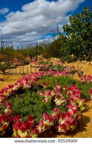 Wild Flowers of Western Australia - stock photo
