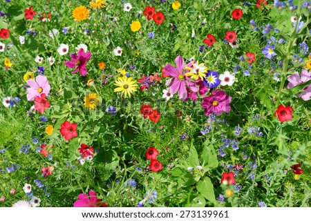 wild flowers on green meadow - stock photo