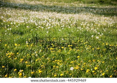 Wild flowers on summer field - stock photo