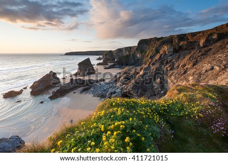 Wild flowers on the cliffs at sunset overlooking the beach and sea stacks at Bedruthan Steps Cornwall England UK Europe